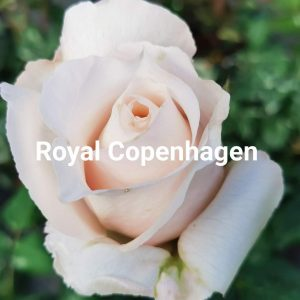 ROYAL COPENHAGEN ®